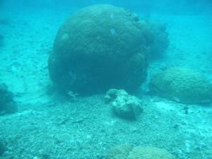 シギラビーチ サンゴ10