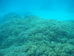 シギラビーチ サンゴ7